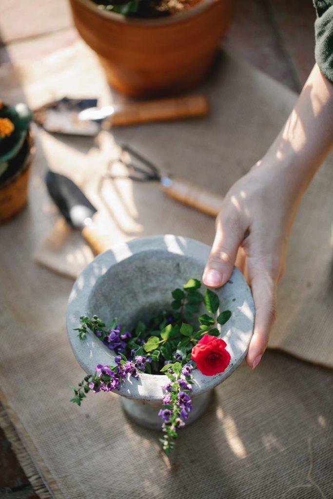 Photographie de Gary Barnes d'une plante dans un pot à fleur prête à être empottée